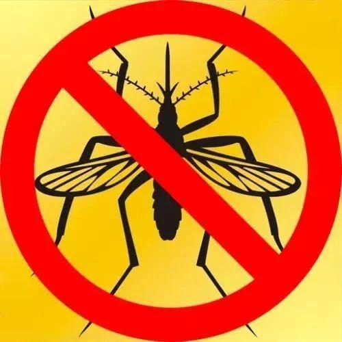 电蚊香液、驱蚊盘香……夏季防蚊靠哪种?丨支招