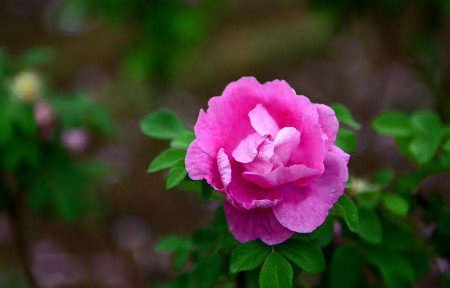 夜市丨520,直男送花,懂男人的女生送它想着亲爱你女生的唱图片