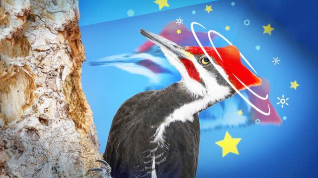 啄木鸟为什么不会脑震荡?明明每天晃脑上万次