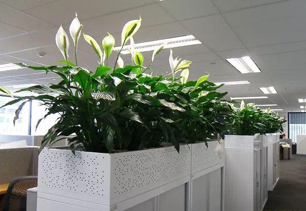 极其耐阴的几种观赏植物,养成桌面上的精致盆栽