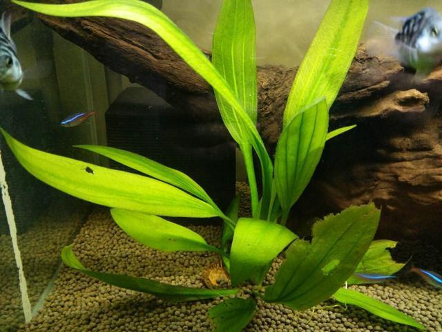 净水魔方是个什么东西,对于鱼缸水质的调理有什么作用?