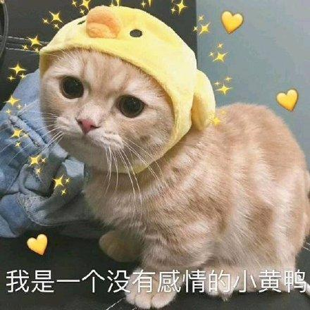 搞笑图片:可爱猫咪的表情包 我的悲伤大概有这么大图片