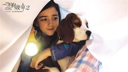 《一条狗的使命2》低于预期,但精彩依旧