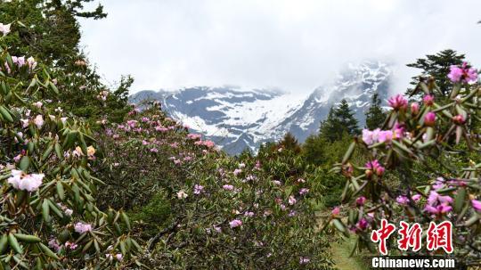 以花为媒:西藏仓央嘉措故里举行杜鹃花节 24对情侣体验门巴族定情婚俗