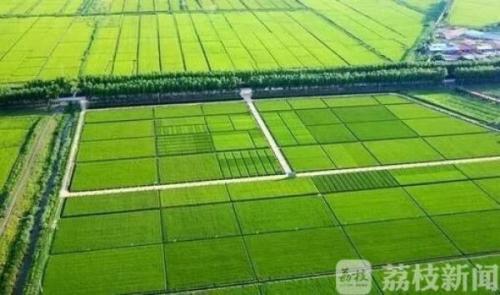 """获奖2亿!首次高标准农田建设""""国考"""" 江苏荣获国办督查激励"""