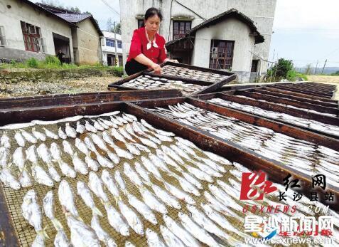 全县火焙鱼年产值100万元