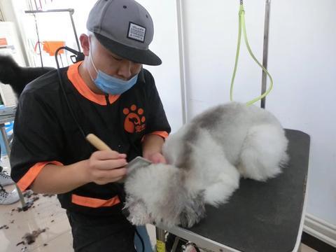 学习宠物美容师培训技术有前途吗