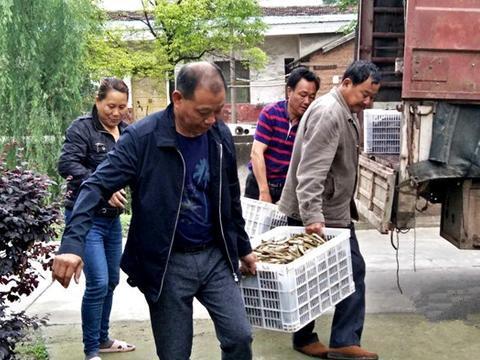 沅江漉湖芦苇场:芦笋产业帮扶,助力贫困户增收