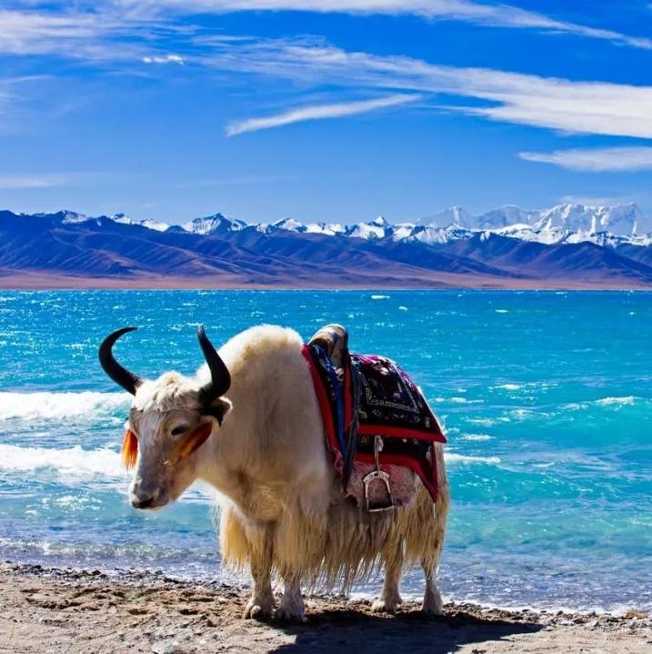 去了西藏才知道,这TM才叫人间天堂
