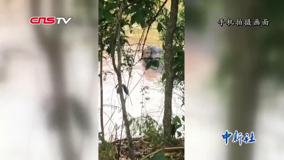 云南思茅:亚洲象闯入工棚搞破坏 当地加强监测