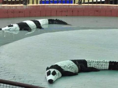 """中国熊猫""""出国""""后,身材都变苗条了,游客:这技术真""""厉害"""""""