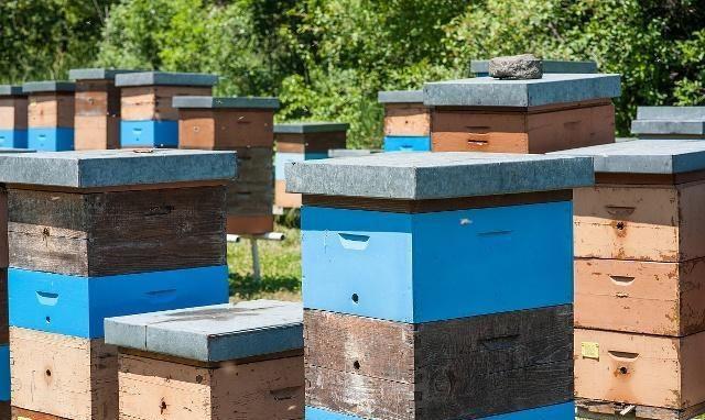 中蜂养殖可以加继箱吗?用隔王板组成上下双王群合适吗