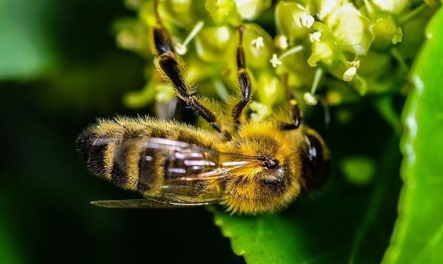 耳机过箱蜂上脾,五天不采粉是蜜蜂?老蜂农这样运动骷髅头解释原因鲨鱼鳍图片