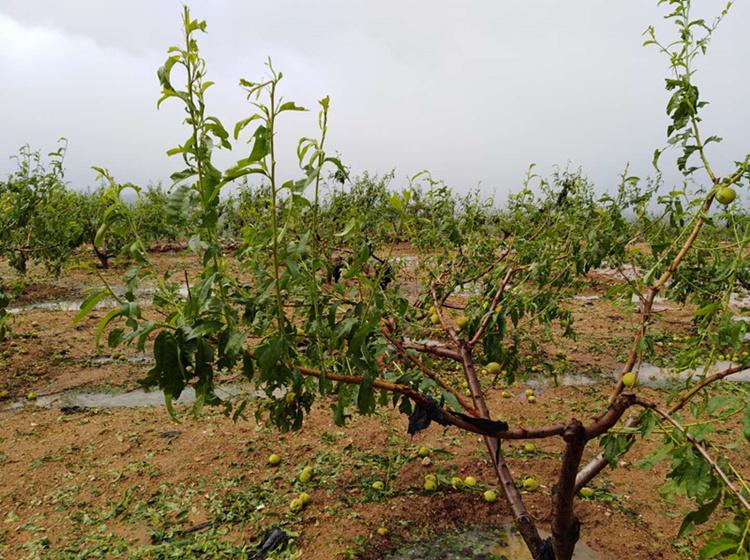 沂南县部分乡镇遭遇冰雹灾害 受灾面积约2000公顷
