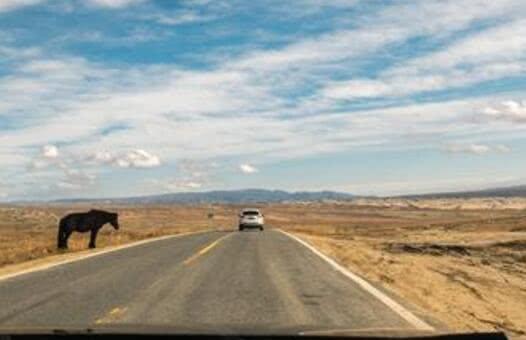高速上开车遇到动物,是让道还是撞上去?两种有啥后果?