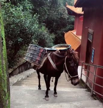 游客跟朋友去爬山,偶遇在路边偷懒的马匹