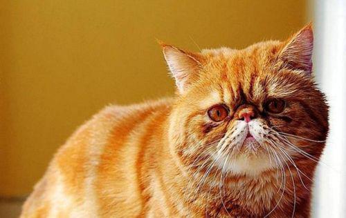 养猫经验:母体带猫鼻支孩子会得么