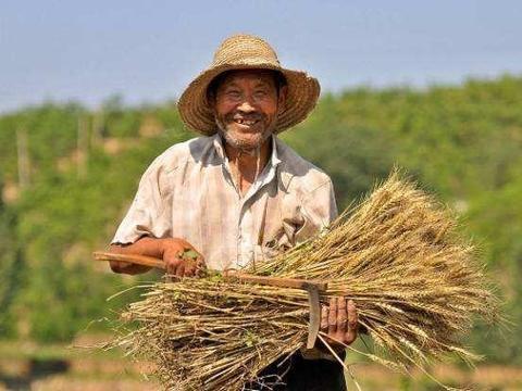 农民笑了:小麦亩产1600多斤,破全国纪录,农业大学教授真厉害