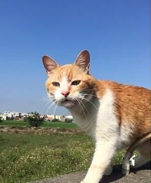 猫咪患上罕见病,每日控制不住流口水,主人却没有遗弃它