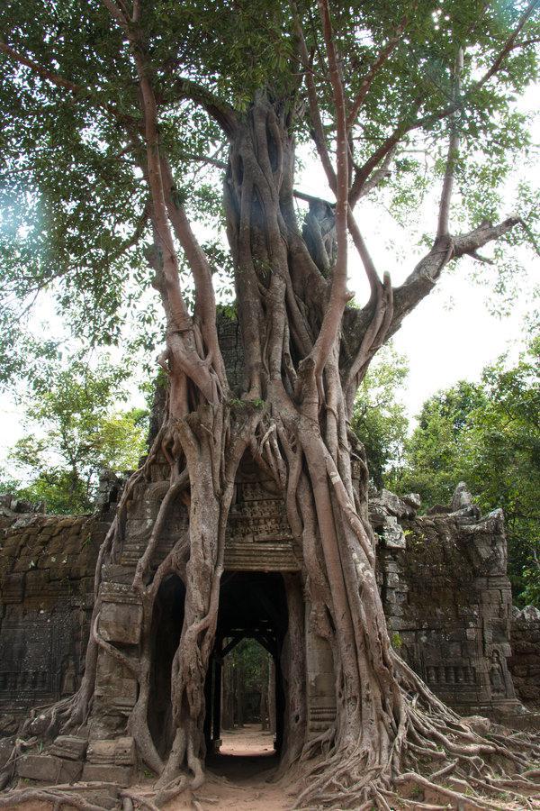 比粒寺也是《古墓丽影》的取景地之一哦。
