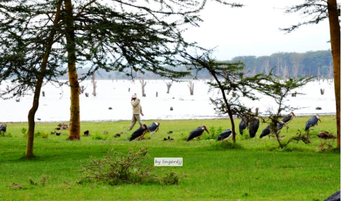 """湘通肯尼亚丨""""打卡""""肯尼亚:这些野生飞禽,你都认识吗"""