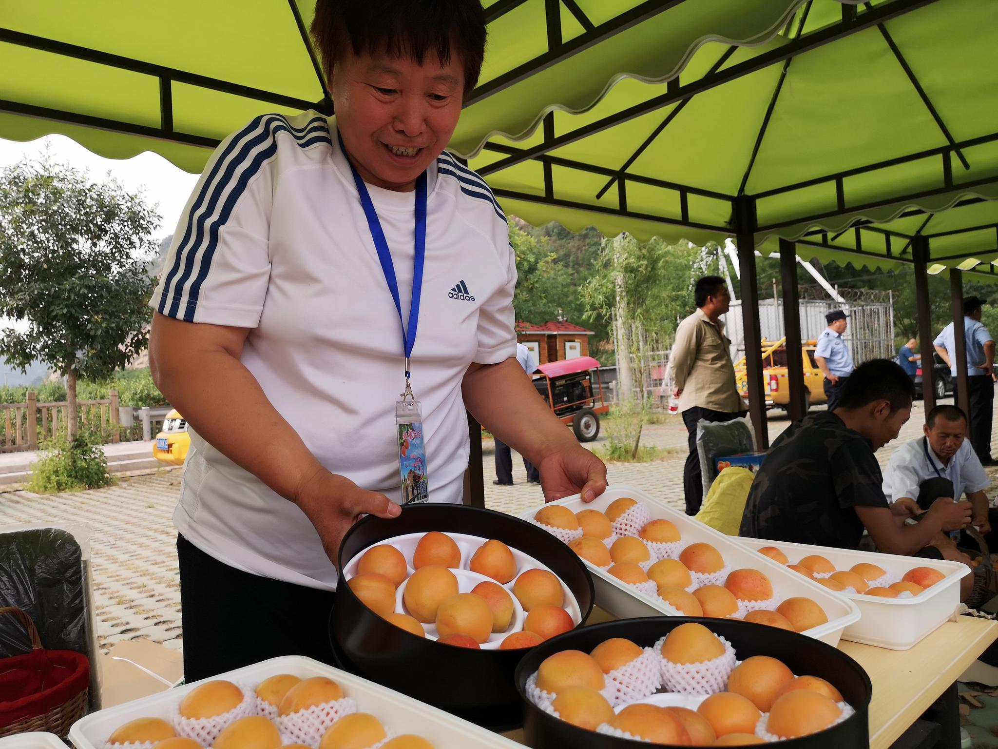 ca953航班 入选北京市唯一性果品,平谷北寨红杏可以采摘了