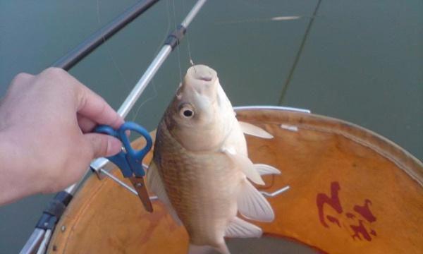 钓鱼10多年,才知道上饵的方法这么多
