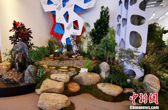 北京世园会组合盆栽国际竞赛展示亮相国际馆