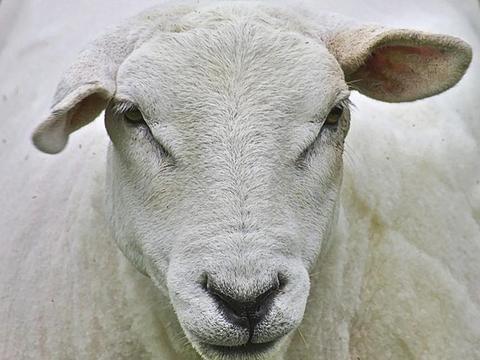畜牧业到底用什么绿色饲料?这些农村产品都是精品