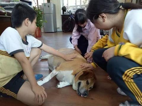 癌症流浪狗痊愈归来!全校小朋友为它准备了一个大大的惊喜……
