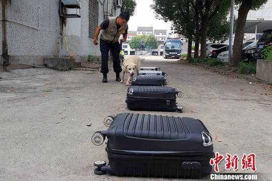 """湖北宜昌:缉毒犬秀""""搜毒""""绝活"""