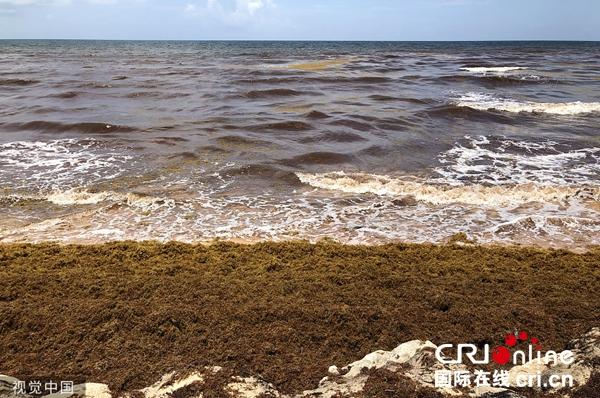 墨西哥加勒比海岸海藻泛滥 海水变色散发恶臭味