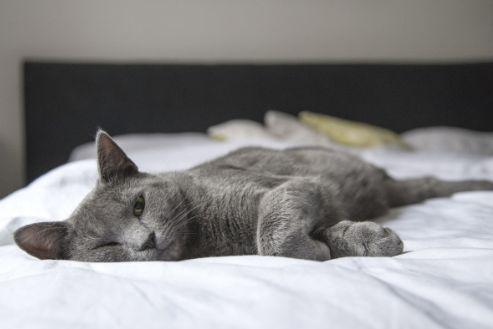 关于小猫的免疫和接种