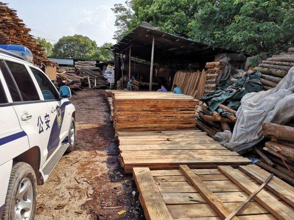 一车木材牵出5个团伙,浏阳查处一起特大滥伐林木、非法收购滥伐林木案