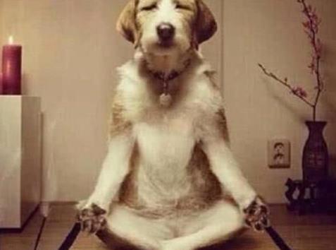 为何主人动手教训狗狗时,它们从不反抗?兽医:你在它眼中是这样