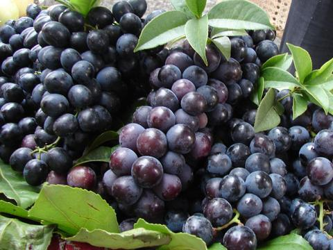 立夏之后!这些水果适合孕妈经常吃,能促进宝宝发育!对视力也好