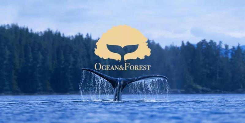 瞄准洗护消费升级,「Ocean&Forest森林海洋」用食用级原材料做国货精细洗护品牌
