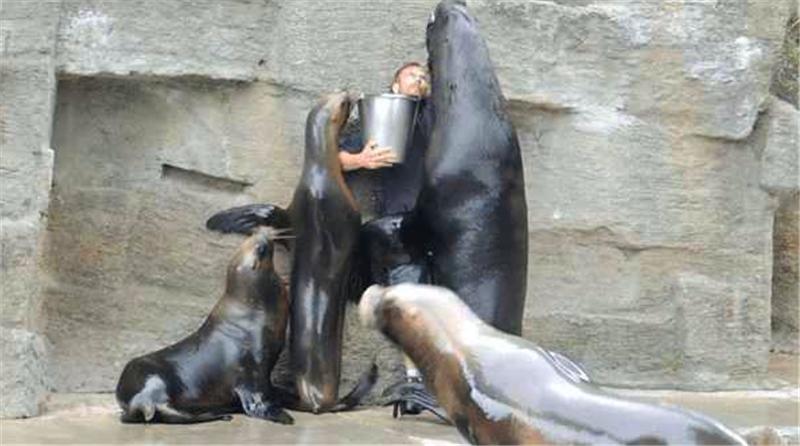 海狮为吃的把饲养员逼到角落,后边的事简直太辣眼睛