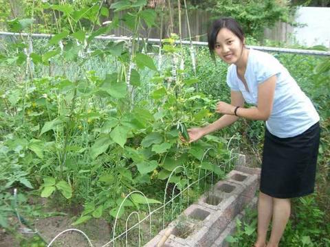 黄瓜种植效益高,如何提高产量,分享3个小技巧