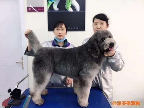 学费便宜的宠物美容学校能学到技术吗