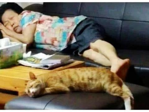怕奶奶一个人孤单,送给她一只橘猫,半年后去看她,直接傻眼了