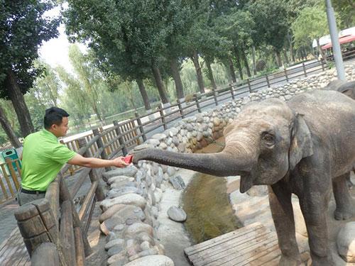 吃西瓜吹空调 北京野生动物防暑降温有妙招