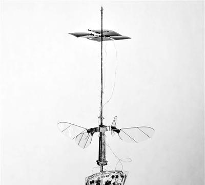 在三倍阳光强度下仿昆虫机器人自由飞行
