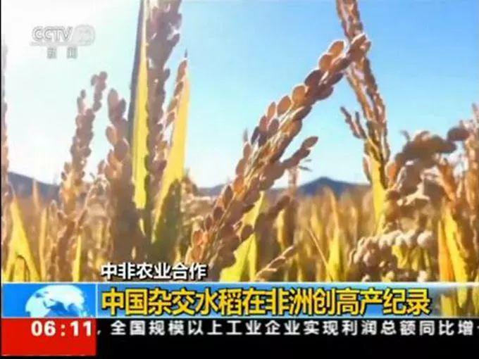 杂交水稻创纪录 我国杂交水稻在非洲创高产纪录