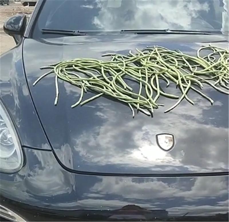 有钱任性!保时捷Macan车上晒豇豆,车价80万,挂4个8车牌