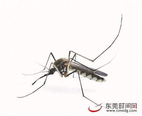 天气炎热蚊虫肆虐,丘疹性荨麻疹来袭!