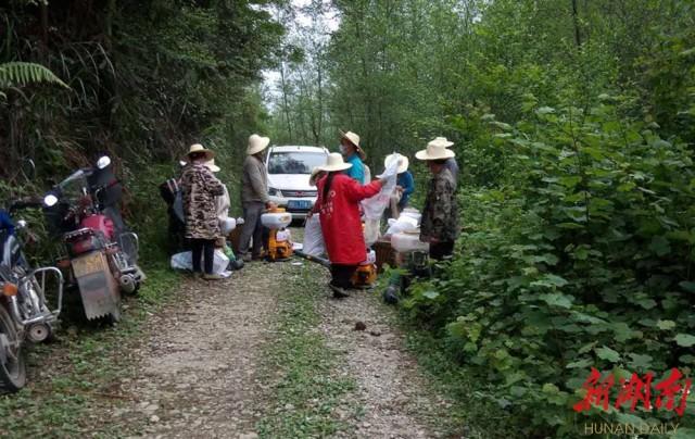 花垣县自然资源局大力开展马尾松毛虫等森林有害生物防治工作