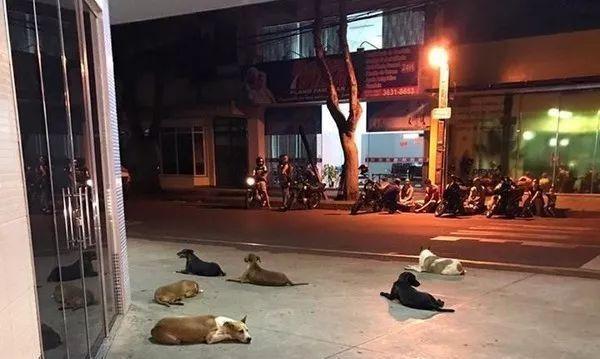 流浪汉中风送医,6只狗一路追赶救护车,24小时守在医院门口