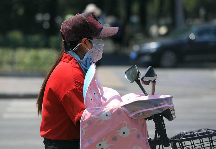 美国狐尾松北京高温将达峰值 直奔40℃ |组图