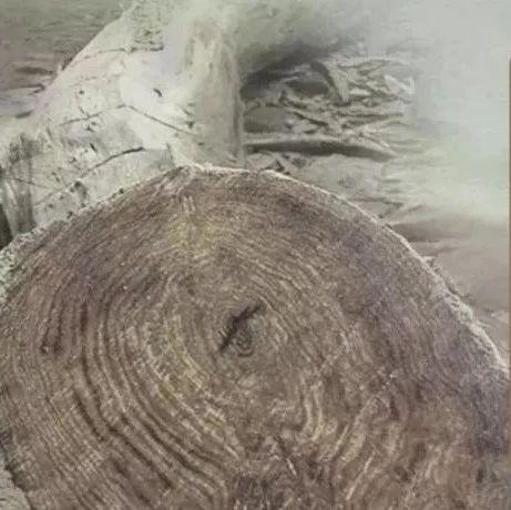 海南立案查处五指山市黄花梨盗砍滥伐问题,刘赐贵沈晓明作出指示批示